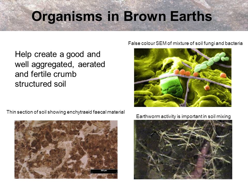 Organisms in Brown Earths