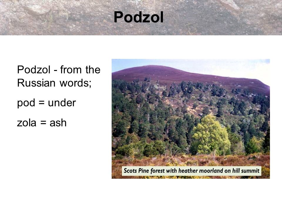 Podzol Podzol - from the Russian words; pod = under zola = ash