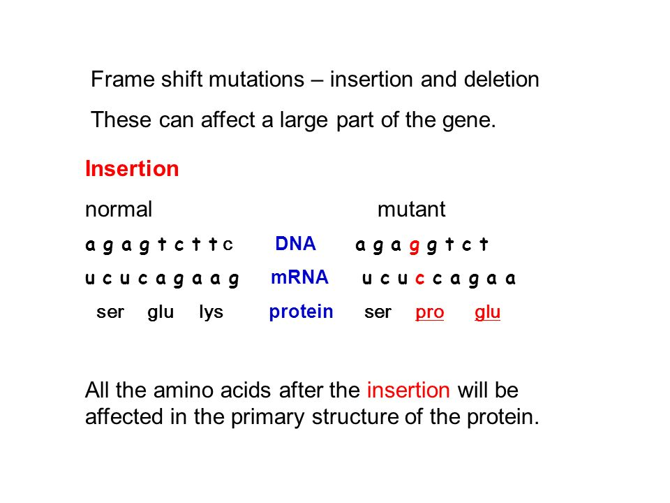 Frame shift mutations – insertion and deletion