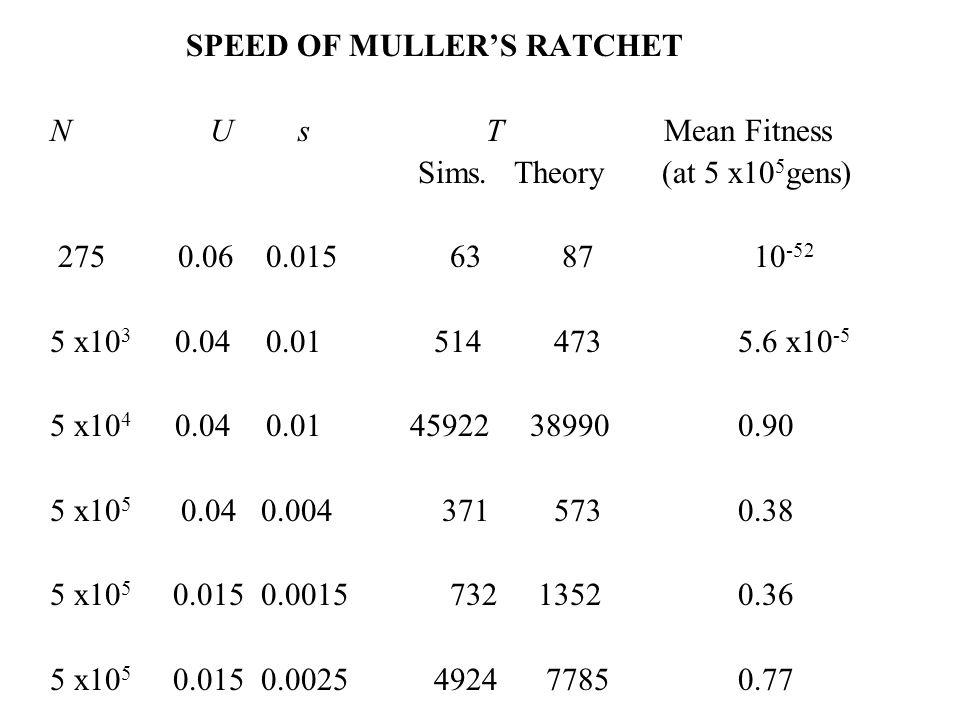 SPEED OF MULLER'S RATCHET