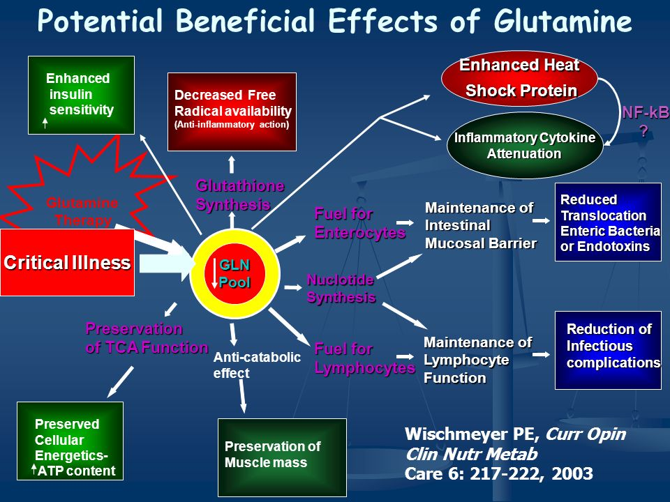 Potential Beneficial Effects of Glutamine