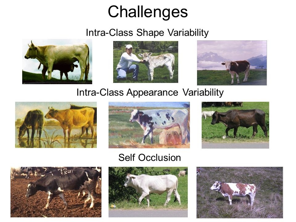 Challenges Intra-Class Shape Variability