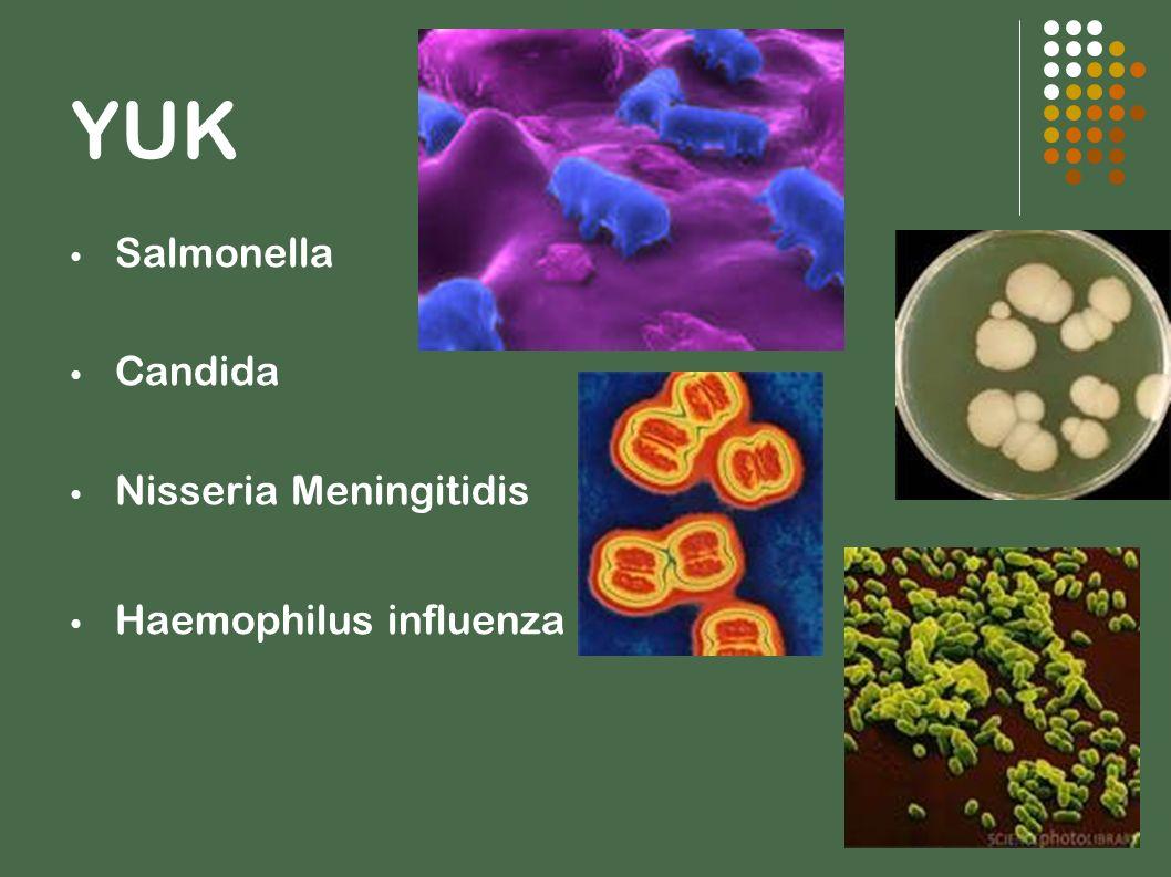 YUK Salmonella Candida Nisseria Meningitidis Haemophilus influenza