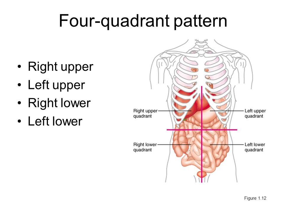 Left abdomen anatomy
