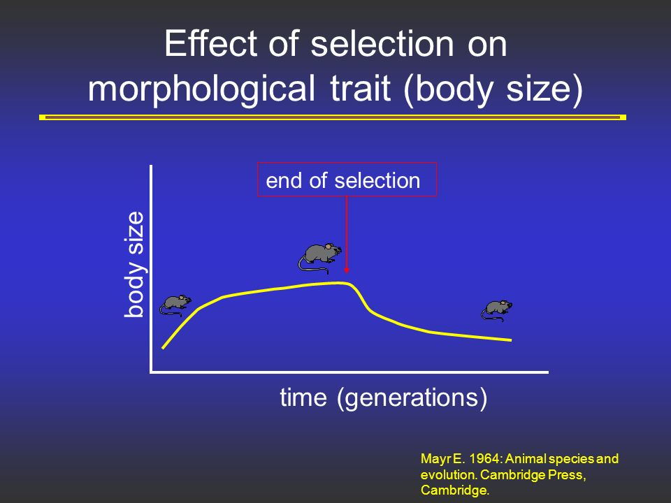the impact of the theory of evolution on natural and sexual selection The mechanism for evolution is natural selection natural selection is the process that decides which adaptations for a given environment are favorable and which are not as desirable if a trait is the favored adaptation, then individuals that have the genes that code for that characteristic will.