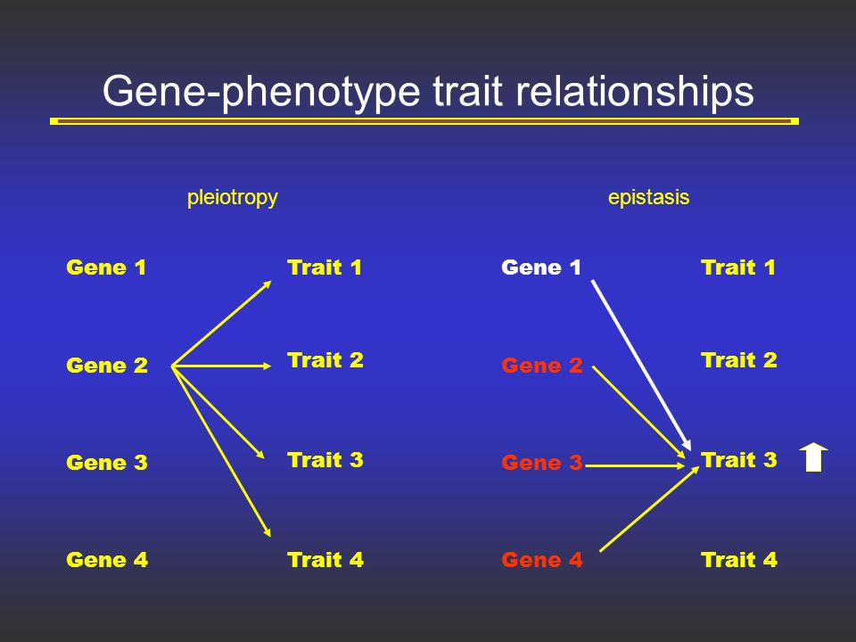 genes and traits relationship quizzes