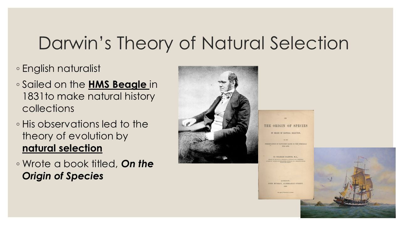 on darwins theory of natural selection Charles darwin's theory of evolution and natural selection describes processes still at work today see how these continue to affect our healthcare.