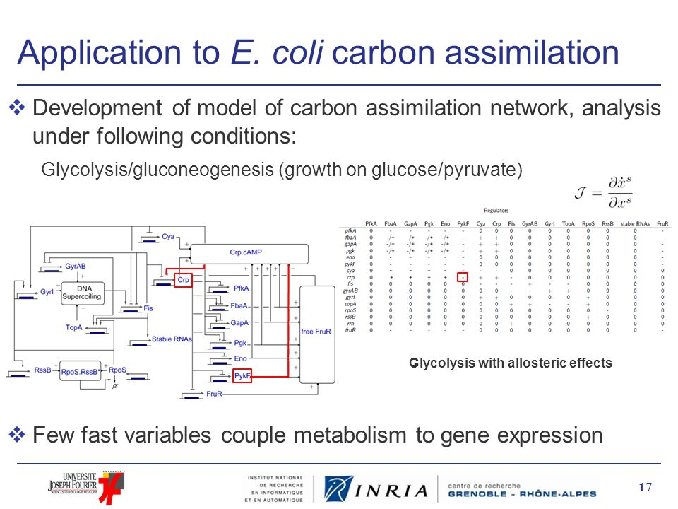 Application to E. coli carbon assimilation