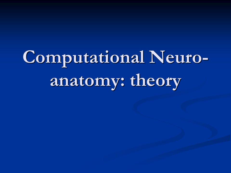 Computational Neuro-anatomy: theory