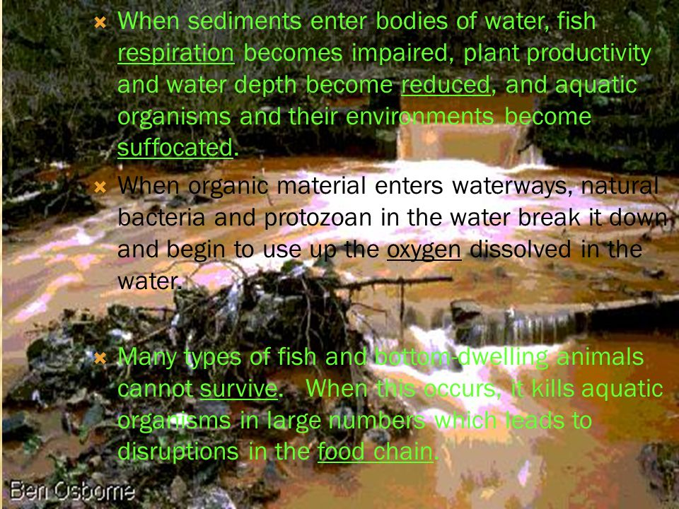 When sediments enter bodies of water, fish respiration becomes impaired, plant productivity and water depth become reduced, and aquatic organisms and their environments become suffocated.