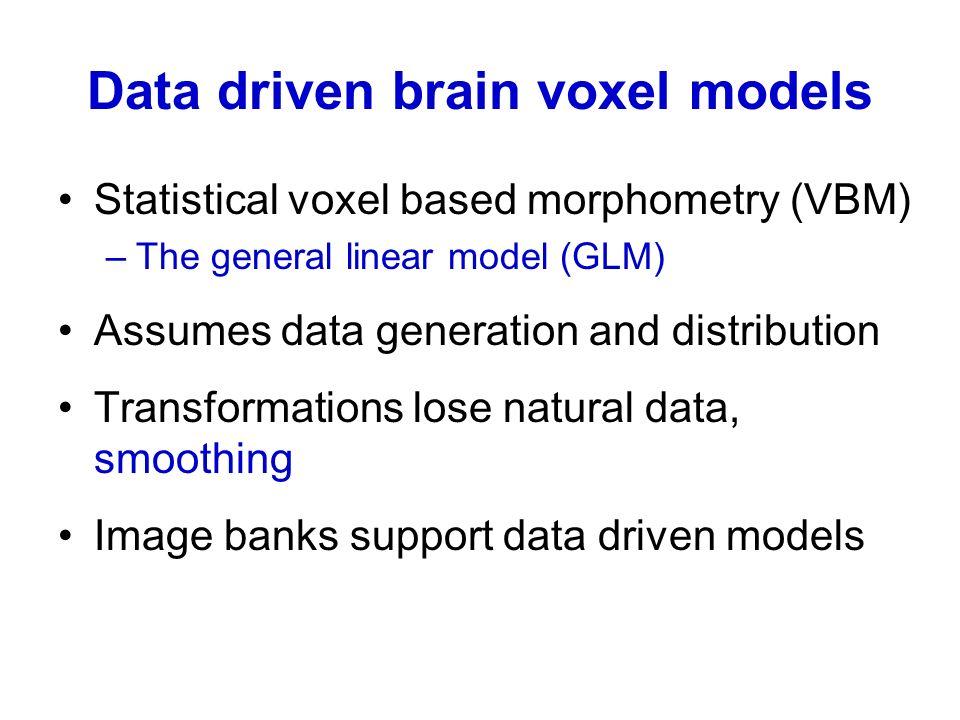 Data driven brain voxel models