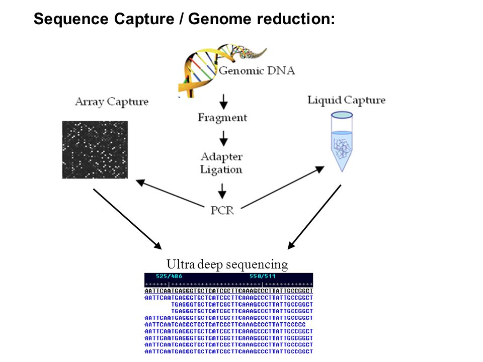 Sequence Capture / Genome reduction: