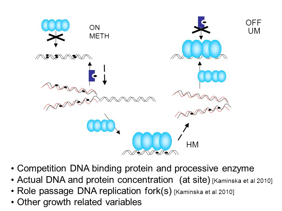 Competition DNA binding protein and processive enzyme
