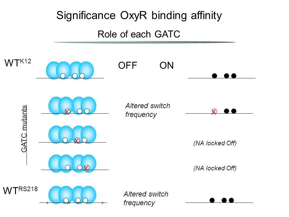 Significance OxyR binding affinity