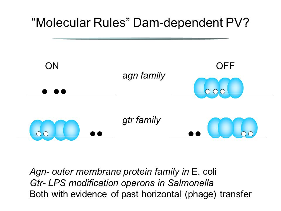 Molecular Rules Dam-dependent PV