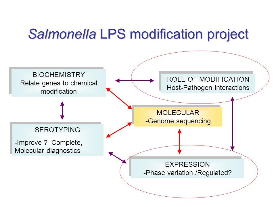 Salmonella LPS modification project
