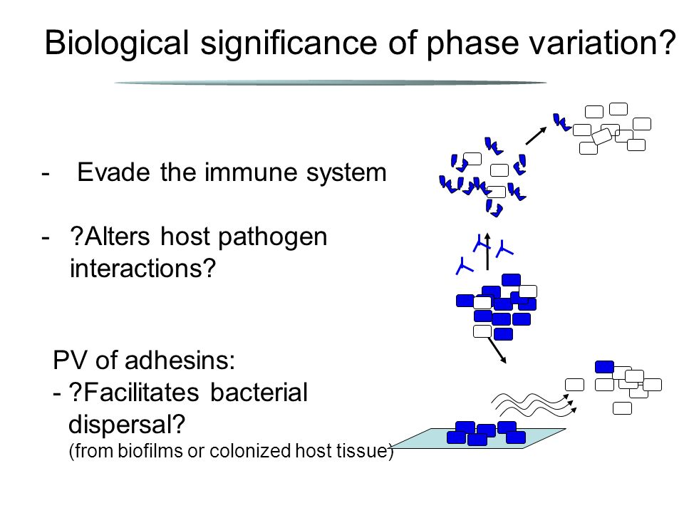 Biological significance of phase variation