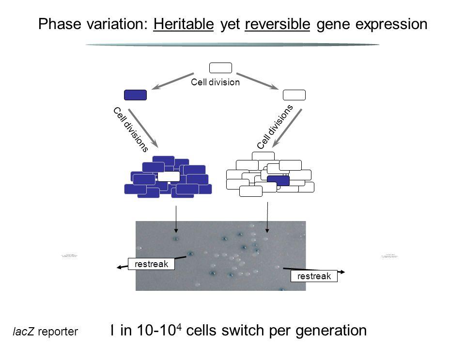 Phase variation: Heritable yet reversible gene expression