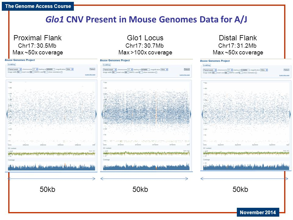 Glo1 CNV Present in Mouse Genomes Data for A/J