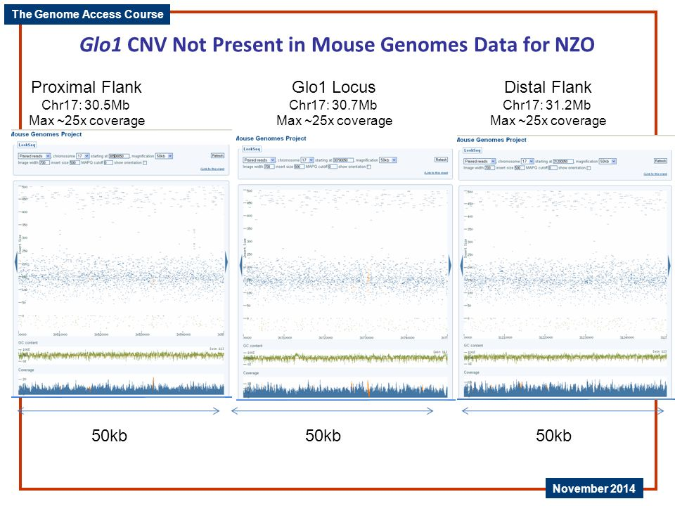 Glo1 CNV Not Present in Mouse Genomes Data for NZO