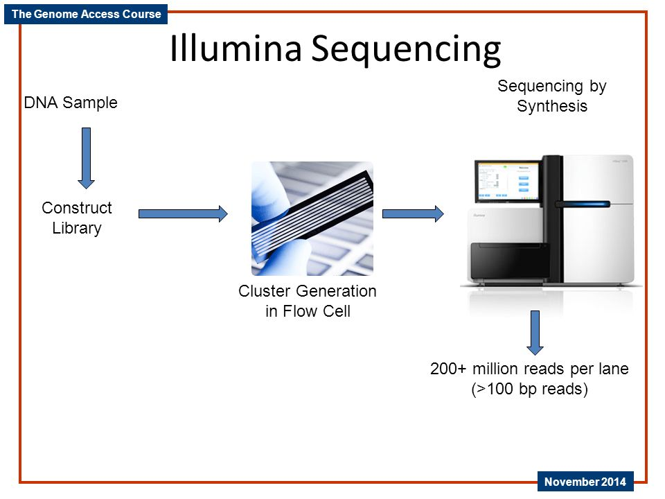 Illumina Sequencing Sequencing by Synthesis DNA Sample Construct