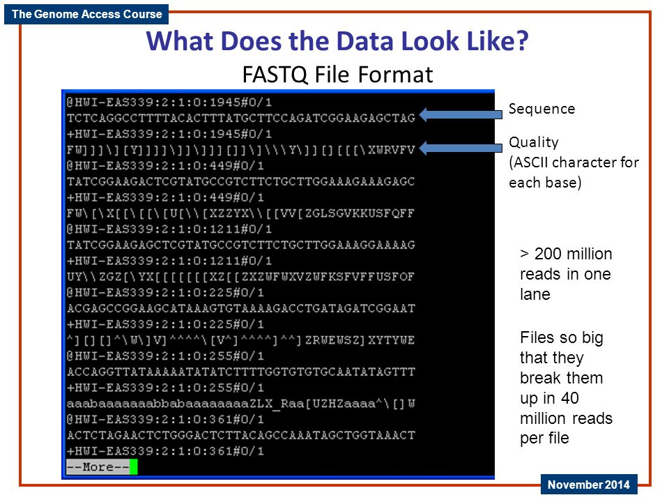 What Does the Data Look Like FASTQ File Format