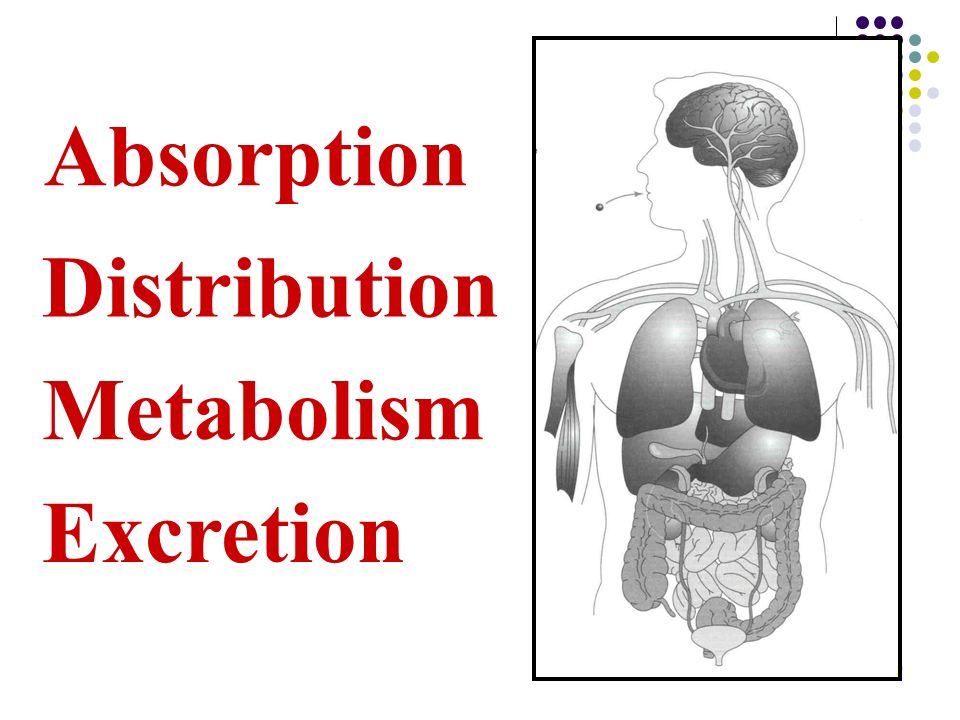 Absorption Distribution Metabolism Excretion