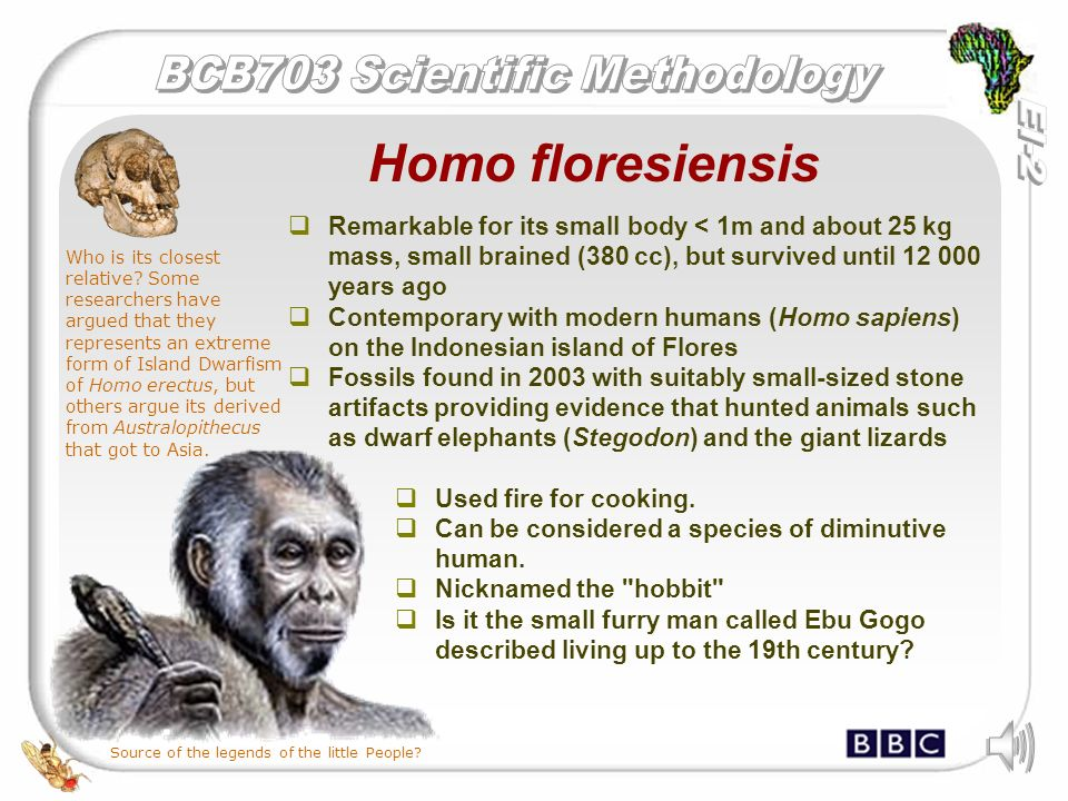 homo erectus pyro technology essay Writing sample of essay on a given topic difference between early man and modern man  between early man and modern man (essay sample)  ancestor homo erectus .