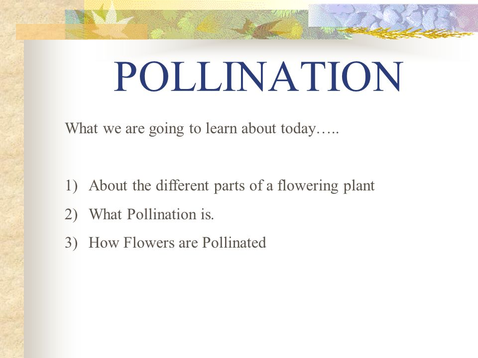 POLLINATION What we are going to learn about today…..
