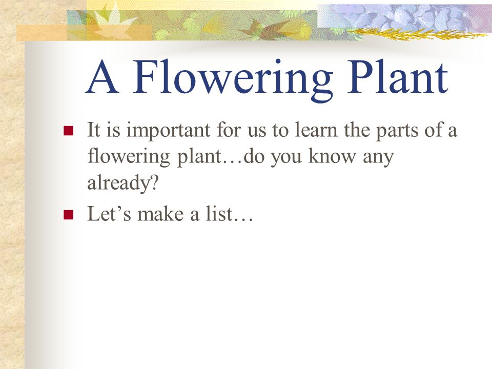 A Flowering Plant It is important for us to learn the parts of a flowering plant…do you know any already