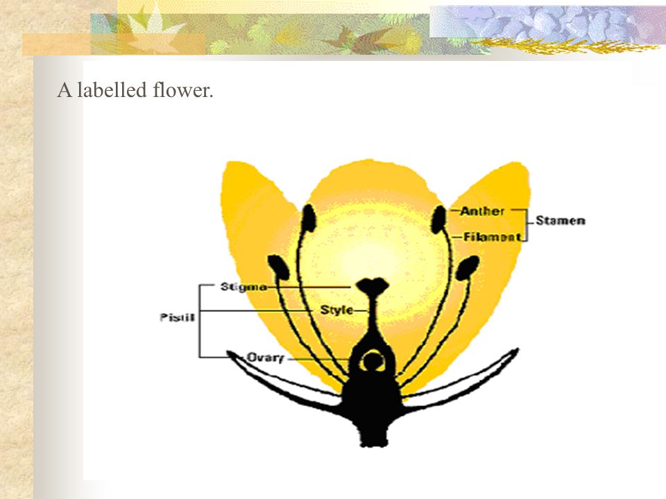A labelled flower.