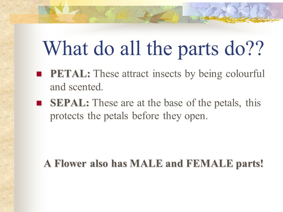 A Flower also has MALE and FEMALE parts!