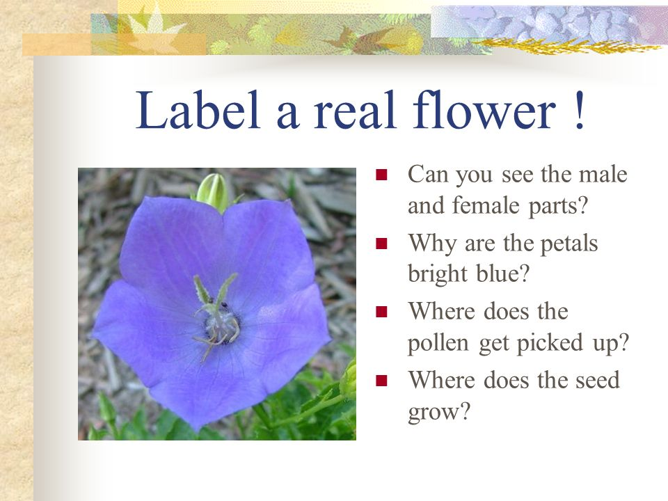 Label a real flower ! Can you see the male and female parts