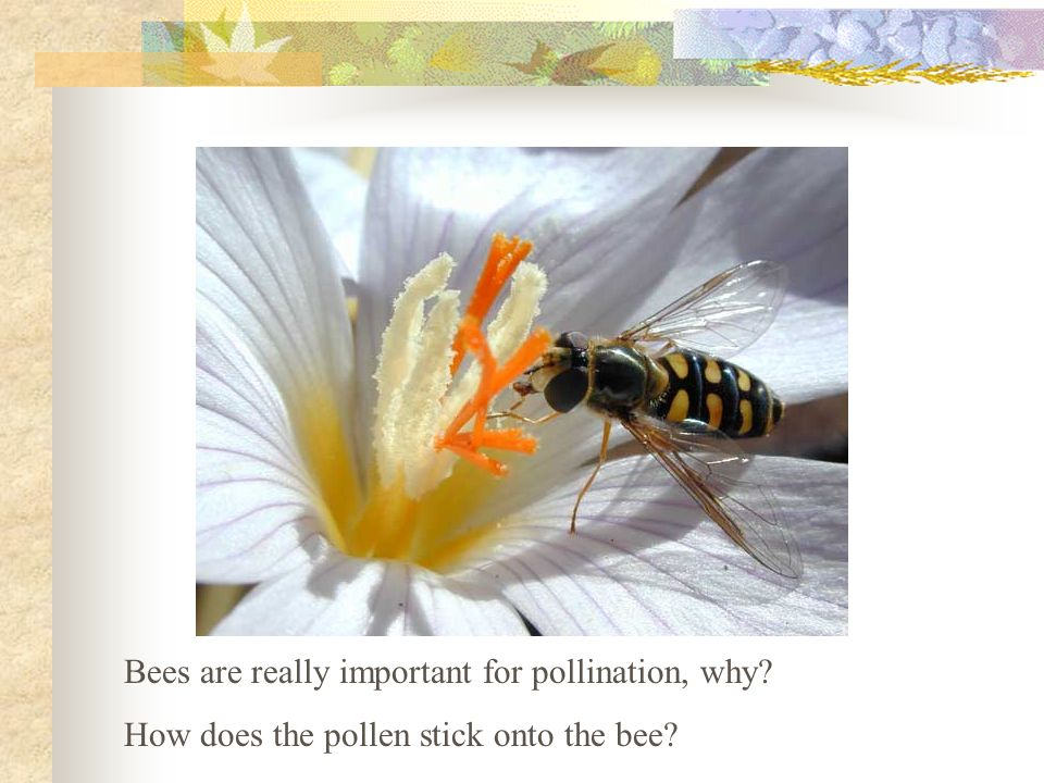 Bees are really important for pollination, why