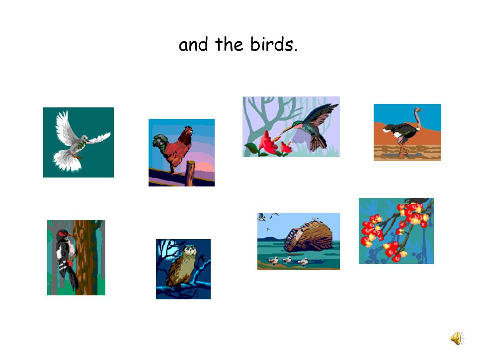 and the birds.
