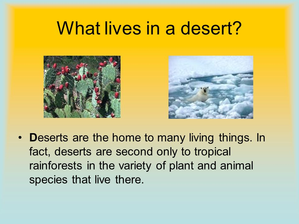 What lives in a desert