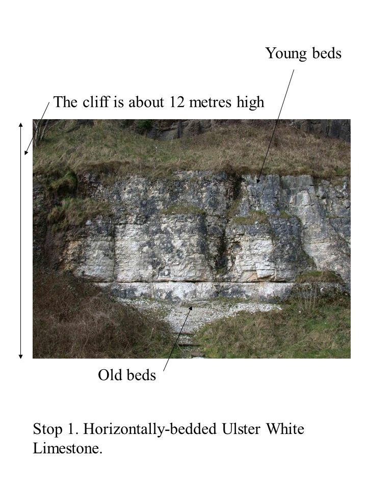 Young beds The cliff is about 12 metres high. Old beds. Stop 1. Horizontally-bedded Ulster White.