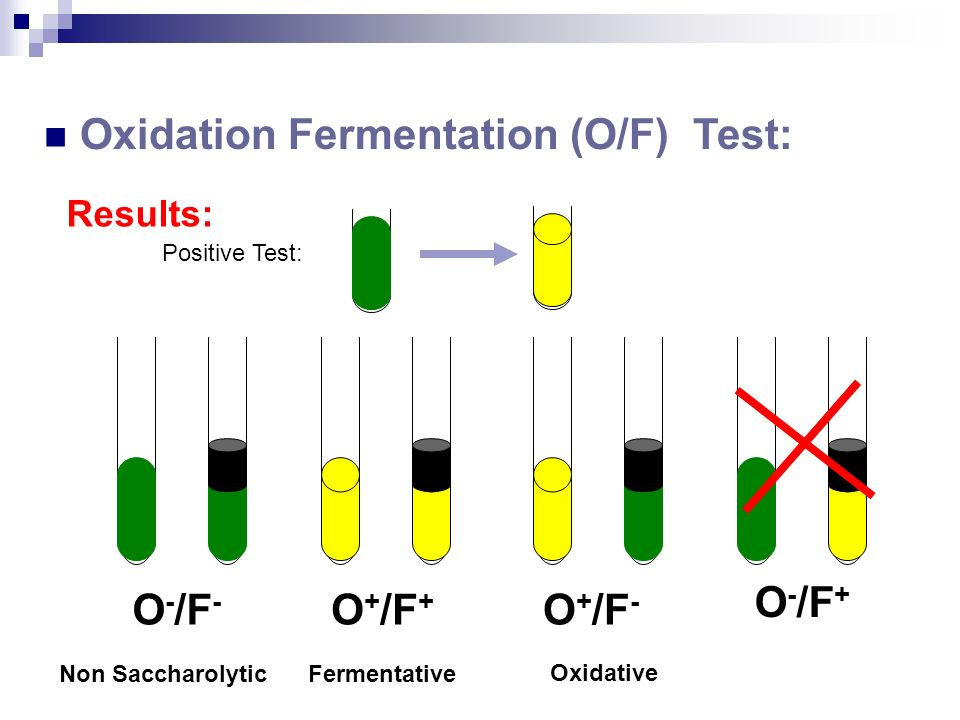 lab results fermenter Lactose fermentation test what is the purpose of the test the purpose is to see if the microbe can ferment the carbohydrate (sugar) lactose as a carbon source how is lactose fermentation determined if lactose is fermented to produce acid end products, the p h of the medium will drop a p h indicator in the medium changes color to indicate acid production.
