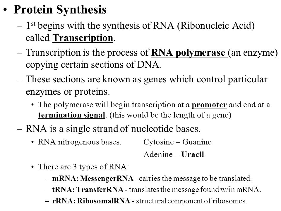 ch 13 rna and protein synthesis Chapter test practice 13: what is synthesized to pass the dna code to the ribosome need a hint a) dna and rna control protein synthesis: b.