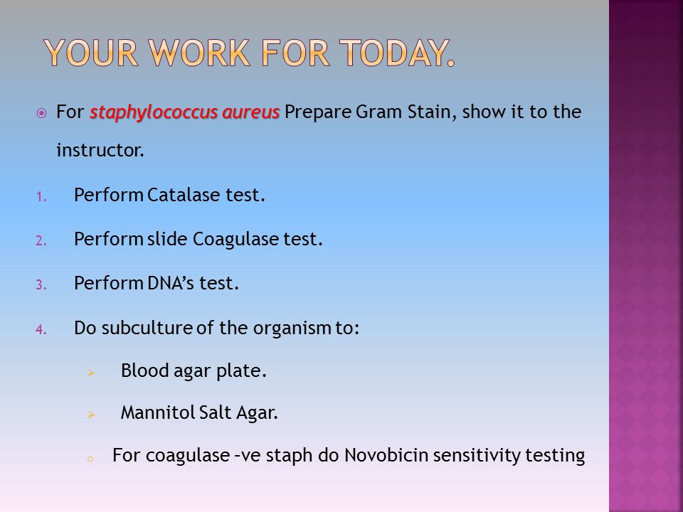 the test on salt preparations Expand ph testing supplies  we look at preparation of these chemical  solutions by weight (w/v) and by volume (v/v)  to make molar nacl solutions of  other concentrations dilute the mass of salt to 1000ml of solution as follows: 01m  nacl.