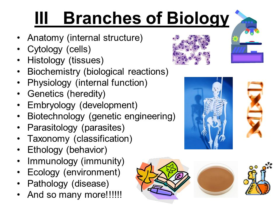 What Are The Main Branches Of Biology And Their Definition