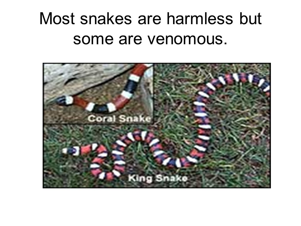 Most snakes are harmless but some are venomous.