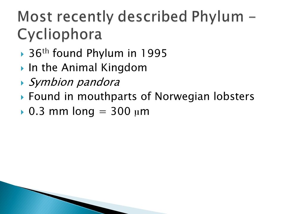 Most recently described Phylum - Cycliophora