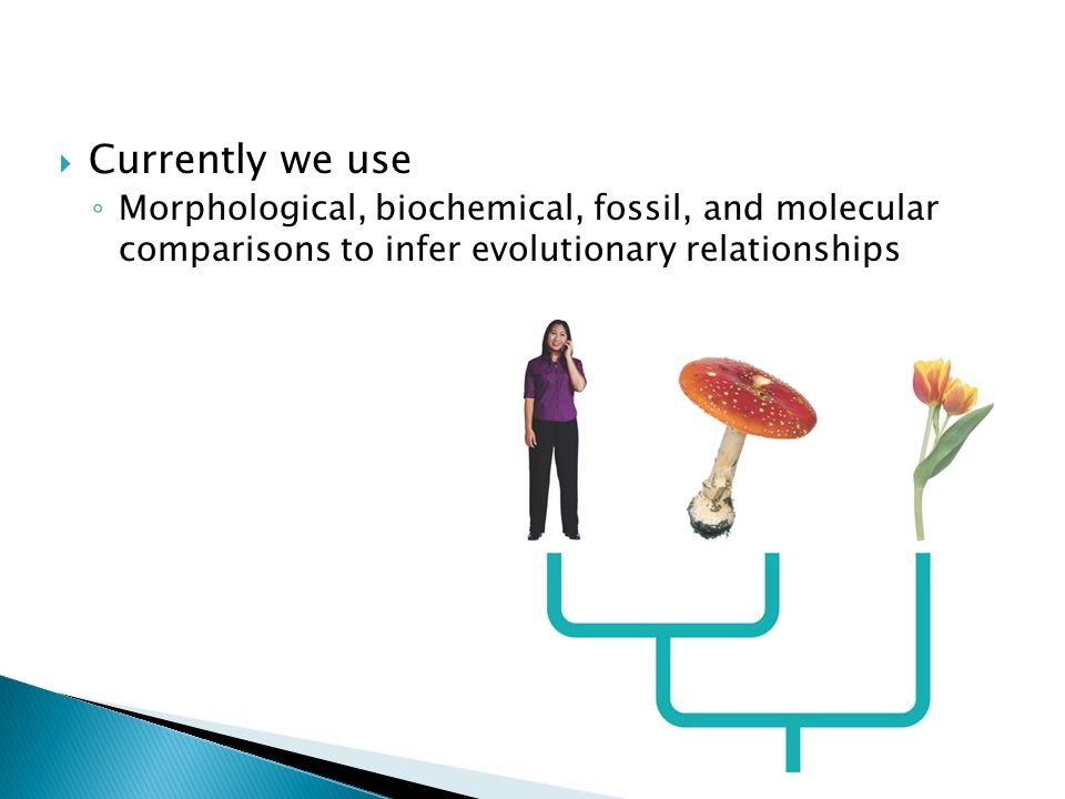 Currently we use Morphological, biochemical, fossil, and molecular comparisons to infer evolutionary relationships.