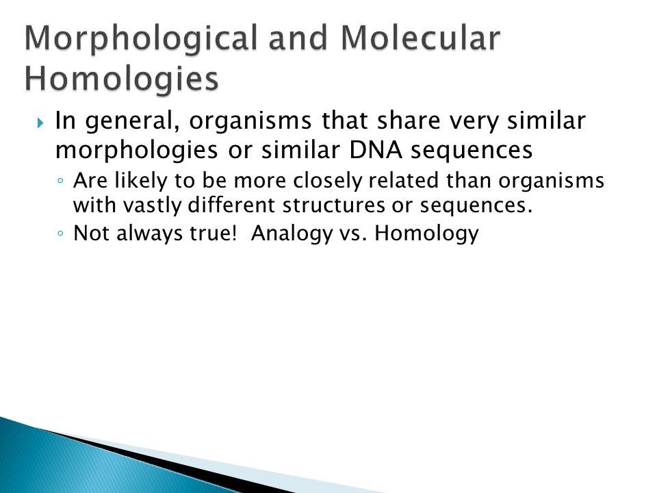 Morphological and Molecular Homologies