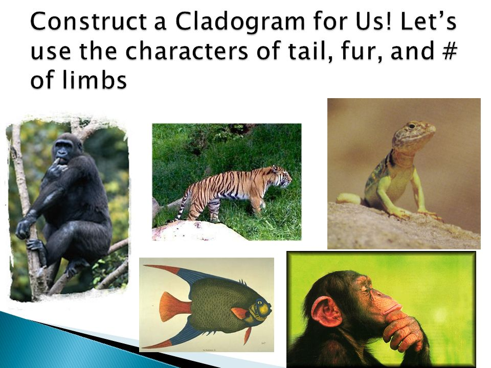 Construct a Cladogram for Us