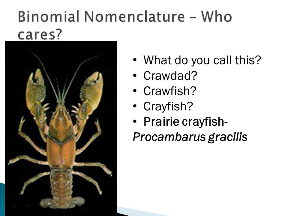 Binomial Nomenclature – Who cares