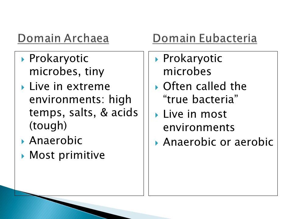 Domain Archaea Domain Eubacteria