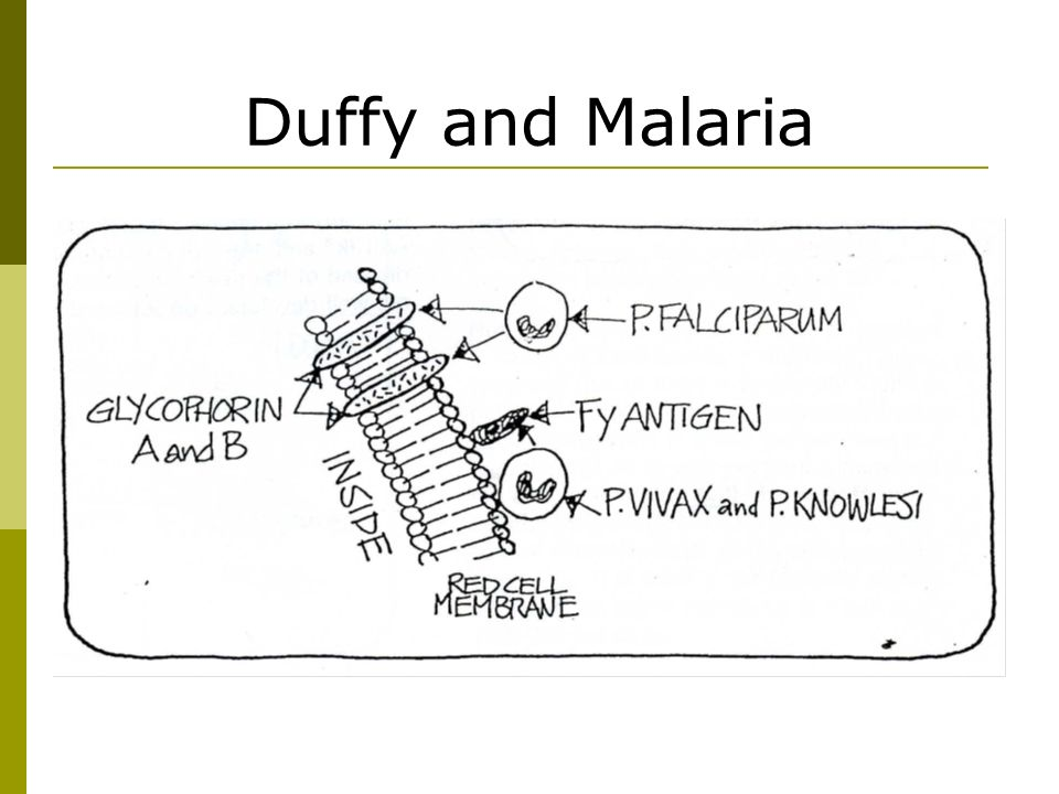 Duffy and Malaria