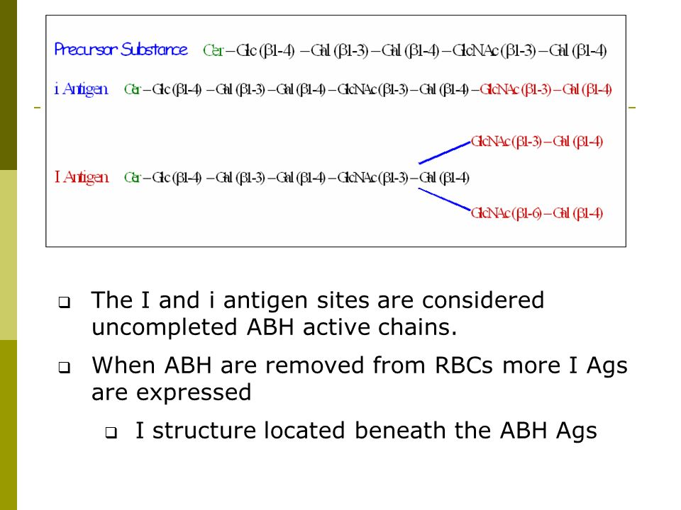The I and i antigen sites are considered uncompleted ABH active chains.